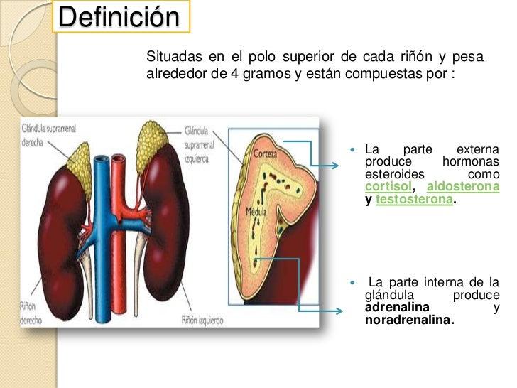 Glándulas suprarrenales Slide 2