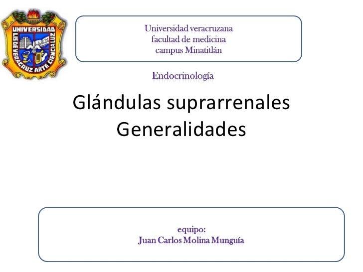 Glándulas suprarrenales    Generalidades