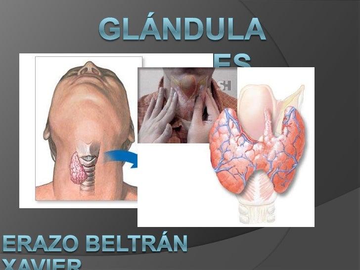 GLÁNDULA TIROIDES<br />ERAZO BELTRÁN XAVIER<br />