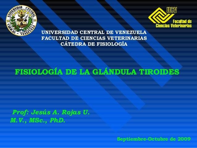 Prof: Jesús A. Rojas U. M.V., MSc., PhD. FISIOLOGÍA DE LA GLÁNDULA TIROIDES UNIVERSIDAD CENTRAL DE VENEZUELA FACULTAD DE C...