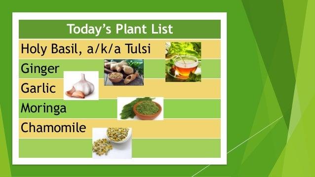 Today's Plant List Holy Basil, a/k/a Tulsi Ginger Garlic Moringa Chamomile