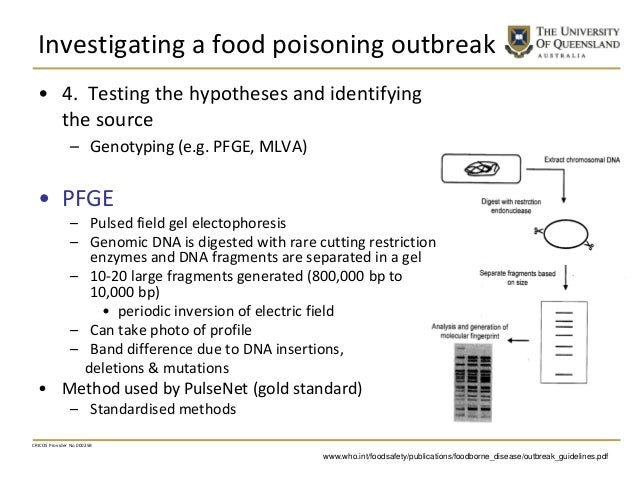 Investigating a food poisoning outbreak • 4. Testing the hypotheses and identifying the source – Genotyping (e.g. PFGE, ML...