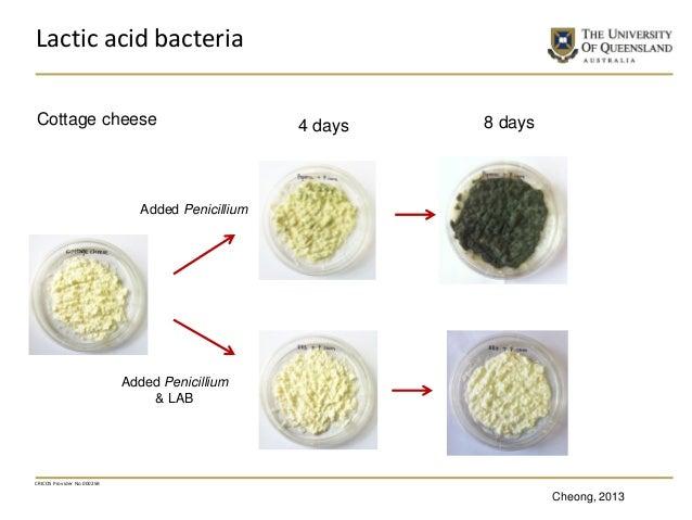 CRICOS Provider No 00025B Lactic acid bacteria 8 days Added Penicillium Added Penicillium & LAB 4 daysCottage cheese Cheon...