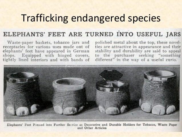 Trafficking endangered species
