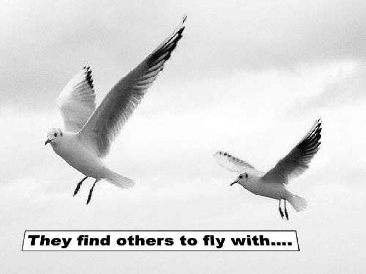 They find others to fly with….<br />