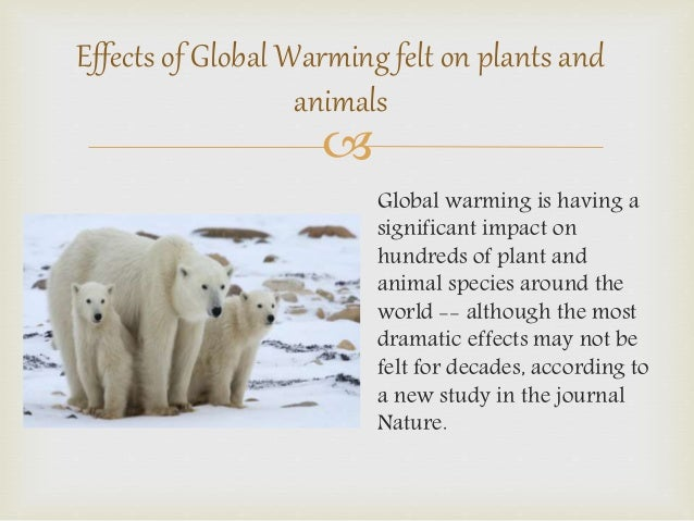 Effects Of Global Warming On Animals