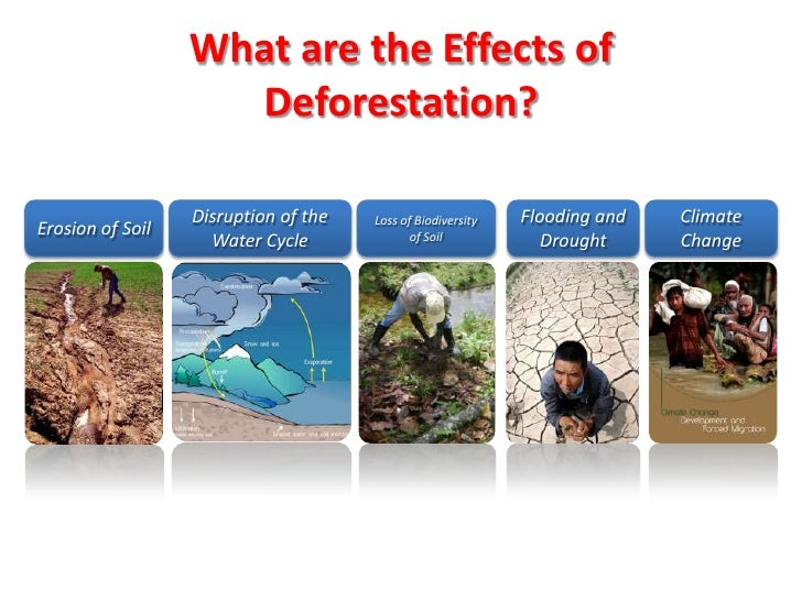 the effect of deforestation on the - deforestation, or the cutting down and removal of all or most of the trees in a forested area, has caused an adverse effect on the natural habitats, or the natural environment of an organism, of plant and animal life(deforestation random house.