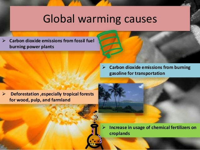 3 DEFORESTATION EXTENT CAUSES AND CONSEQUENCES