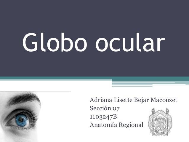 Globo ocular Adriana Lisette Bejar Macouzet Sección 07 1103247B Anatomía Regional