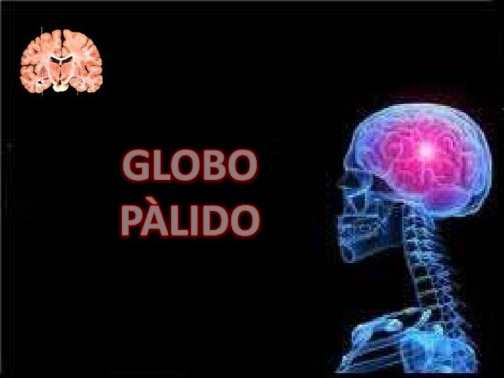 una pequeña estructura gris que está localizada             en la base del cerebro.  El globo pálido forma junto con el pu...