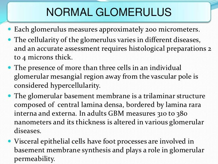 NORMAL GLOMERULUS Each glomerulus measures approximately 200 micrometers. The cellularity of the glomerulus varies in di...