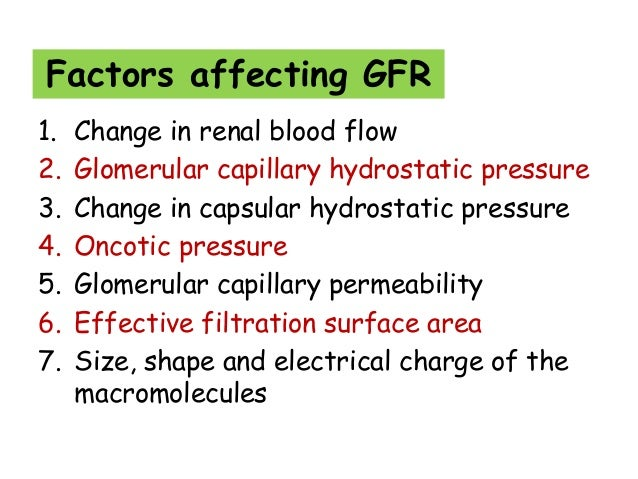 Activity 2 effect of pressure on glomerular filtration