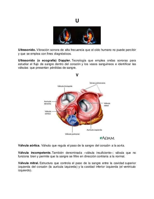 Bonito Anatomía Línea Adam Cresta - Imágenes de Anatomía Humana ...