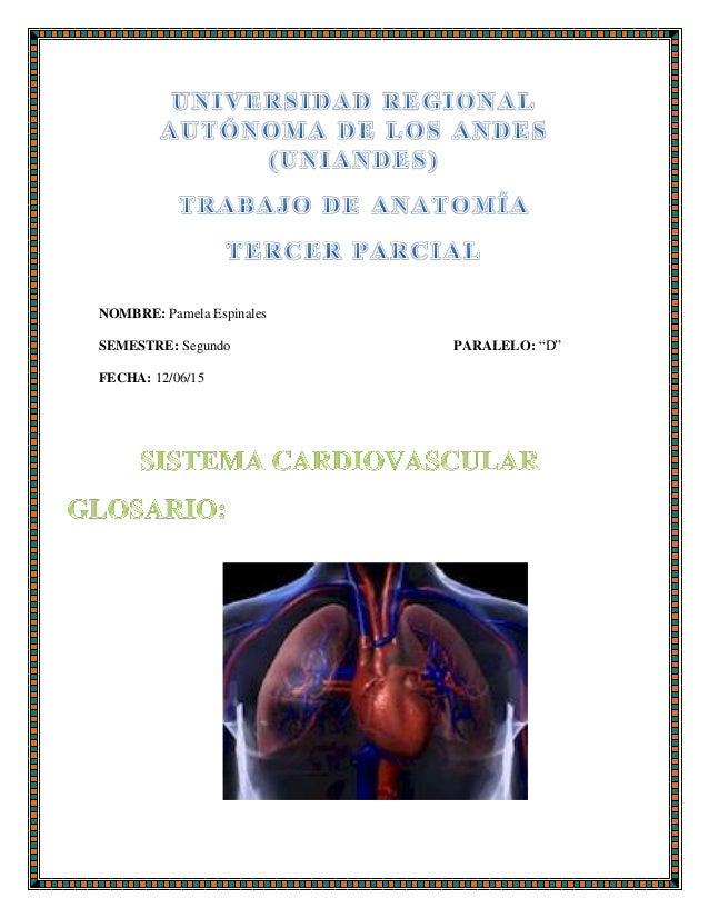 Glosario de Anatomia Sistema Cardiovascular