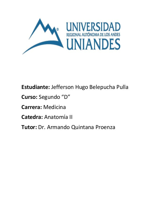 "Estudiante: Jefferson Hugo Belepucha Pulla Curso: Segundo ""D"" Carrera: Medicina Catedra: Anatomía II Tutor: Dr. Armando Qu..."