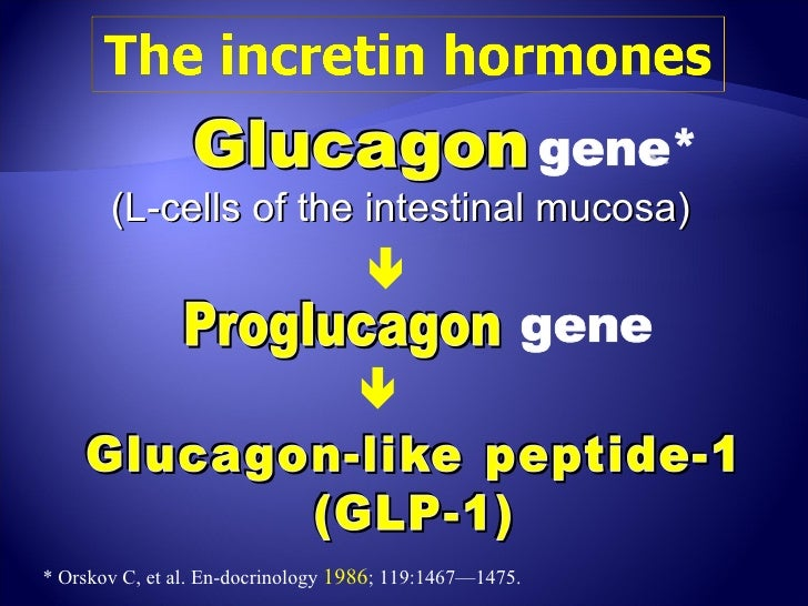 (L-cells of the intestinal mucosa)                                                                       * Orskov C, et ...