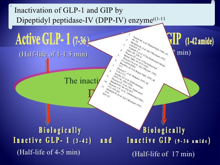 GLP-1 (yellow) released by enteroendocrine L-cells,             diffuses to the capillaries, where it is inactivated by   ...