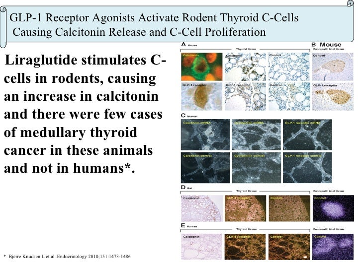 Exenatide (Byetta®) and liraglutide (Victoza®)    and medullary thyroid cancer (MTC) concerns* Previous studies with rat ...