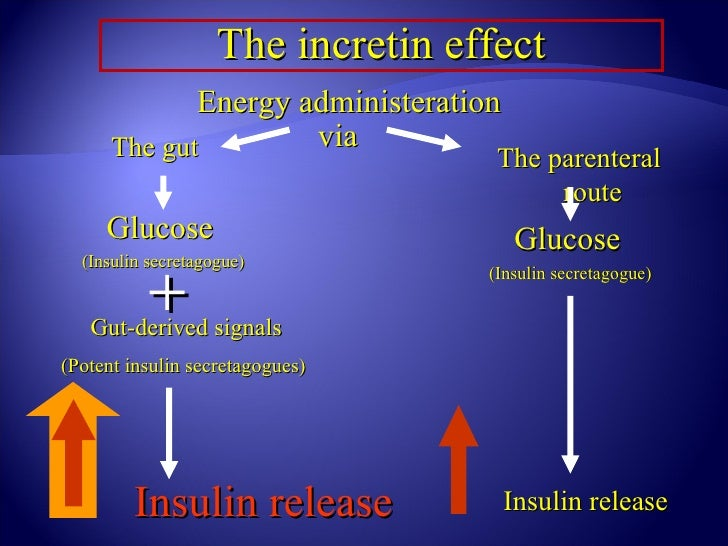 The incretin effect             Energy administeration      The gut        via                                    The pare...