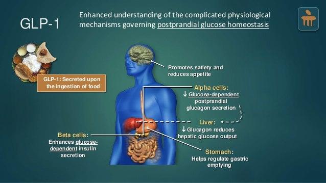 GLP-1 and Diabetes Mellitus