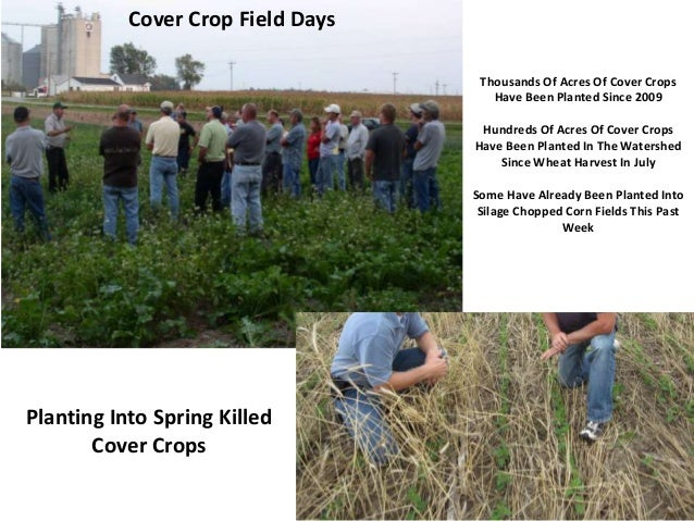 Cover Crop Field Days Thousands Of Acres Of Cover Crops Have Been Planted Since 2009 Hundreds Of Acres Of Cover Crops Have...