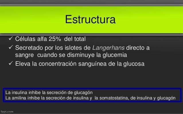 Glucagón Fisiología Medica