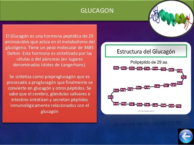 Glucagon, somatostatina y polipepeptico pancreatico