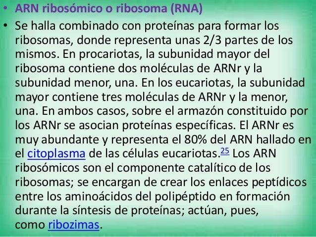 • ARN de transferencia (RNA) • Son cortos polímeros de unos 80 nucleótidos que transfiere un aminoácido específico al poli...