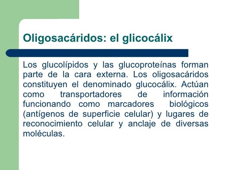 Oligosacáridos: el glicocálix <ul><li>Los glucolípidos y las glucoproteínas forman parte de la cara externa. Los oligosacá...