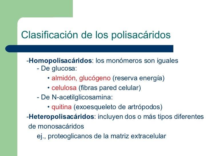 <ul><li>Homopolisacáridos : los  monómeros son iguales </li></ul><ul><ul><li>De glucosa: </li></ul></ul><ul><ul><ul><li>• ...