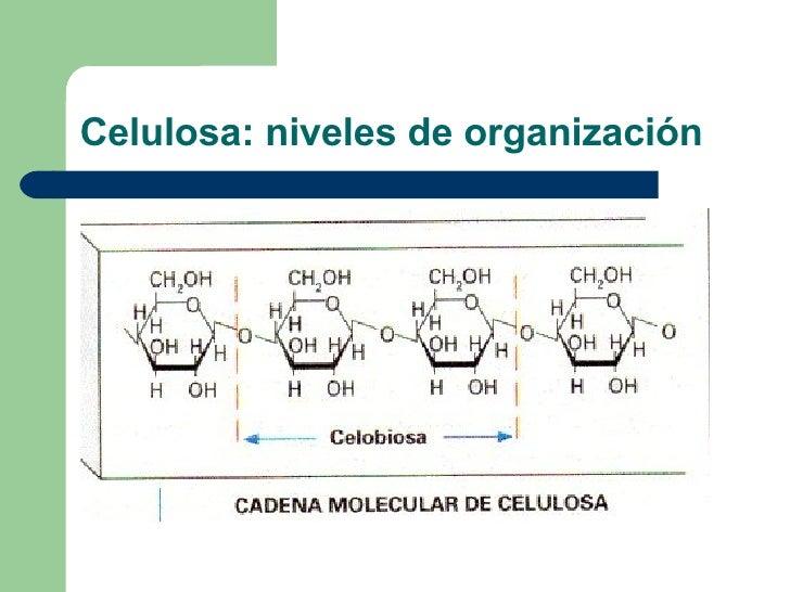 Celulosa: niveles de organización
