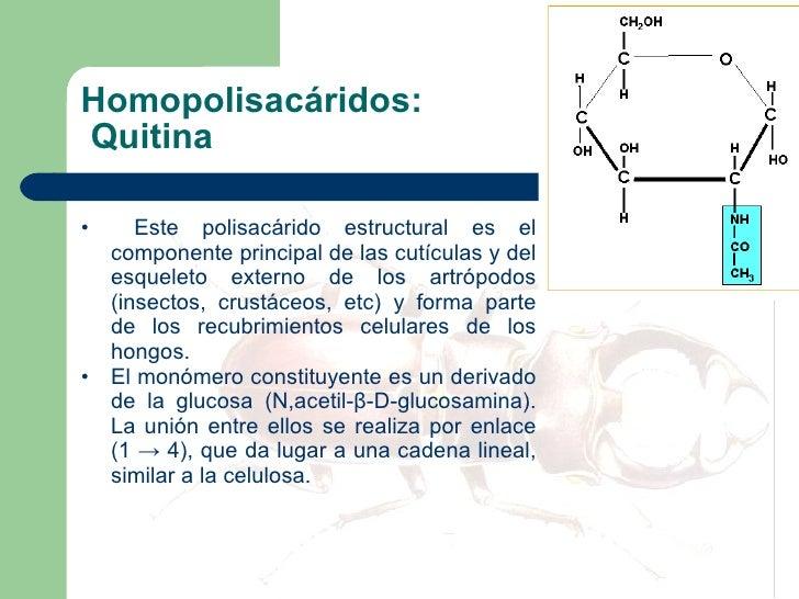 Homopolisacáridos:  Quitina <ul><li>Este polisacárido estructural es el componente principal de las cutículas y del esquel...