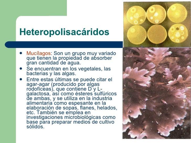Heteropolisacáridos <ul><li>Mucílagos : Son un grupo muy variado que tienen la propiedad de absorber gran cantidad de agua...