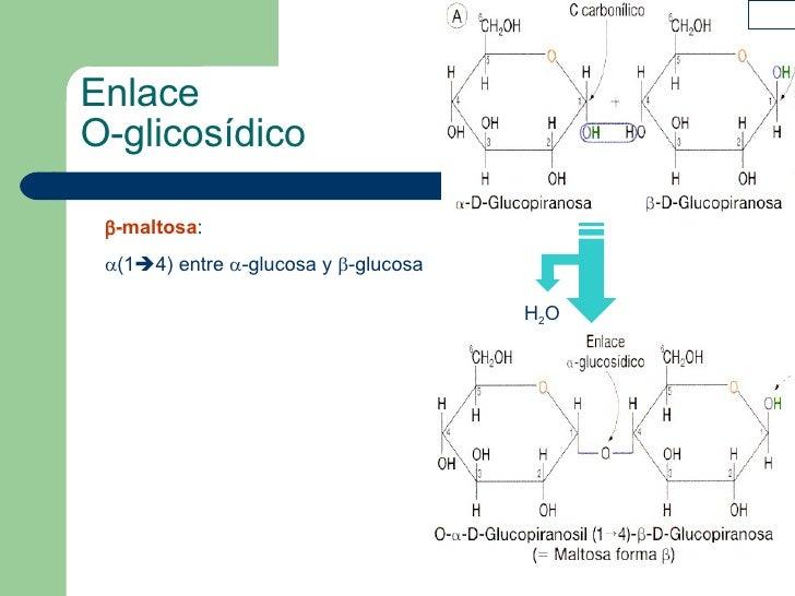 Enlace  O-glicosídico  -maltosa :  (1  4) entre   -glucosa y   -glucosa H 2 O
