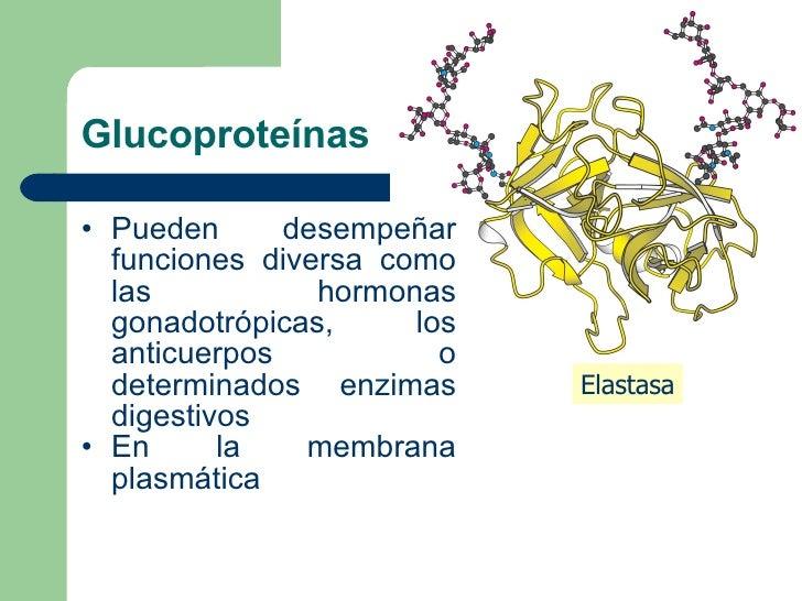 Glucoproteínas <ul><li>Pueden desempeñar funciones diversa como las hormonas gonadotrópicas, los anticuerpos o determinado...