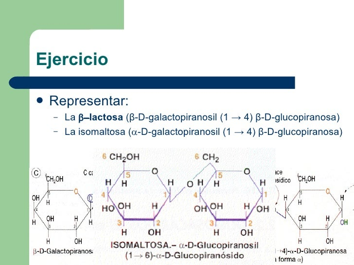Ejercicio <ul><li>Representar: </li></ul><ul><ul><li>La    lactosa  (β-D-galactopiranosil (1 -> 4) β-D-glucopiranosa) </...