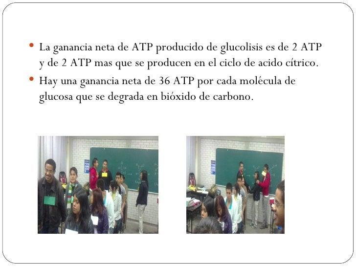  La ganancia neta de ATP producido de glucolisis es de 2 ATP  y de 2 ATP mas que se producen en el ciclo de acido cítrico...