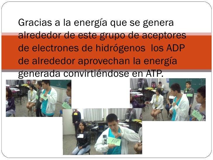 Gracias a la energía que se generaalrededor de este grupo de aceptoresde electrones de hidrógenos los ADPde alrededor apro...