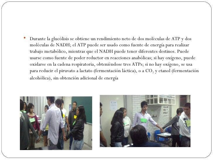  Durante la glucólisis se obtiene un rendimiento neto de dos moléculas de ATP y dos   moléculas de NADH; el ATP puede ser...