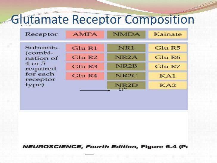 Glutamate Receptor Composition<br />Out<br />In<br />Subunits<br />{<br />NMDAR1<br />NMDAR2a<br />NMDAR2b<br />NMDAR2c<br...