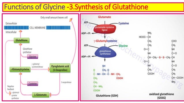 Glycine metabolism & its clinical significance