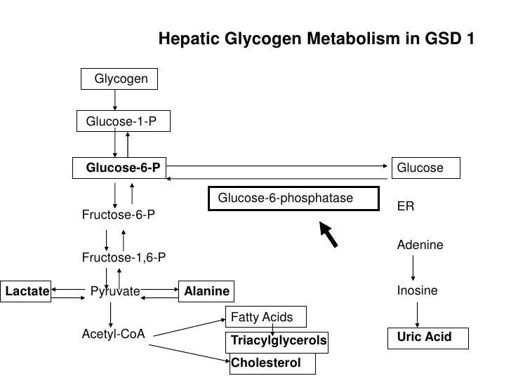 Glycogen Storage Disease Case Study