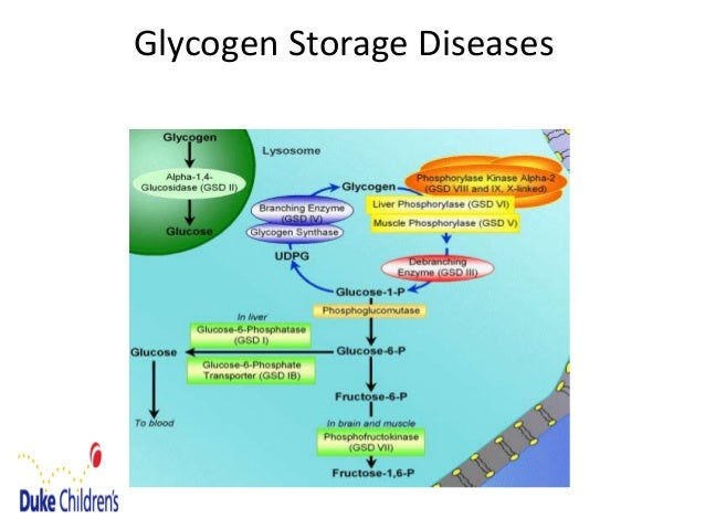 glycogen storage disease current perspectives biology essay Children with glycogen storage disease can make glycogen but cannot effectively catabolize it glycogen is thus stored in huge quantities in the liver during periods of starvation, eg during an intercurrent viral illness, the children become hypoglycemic and lethargic.