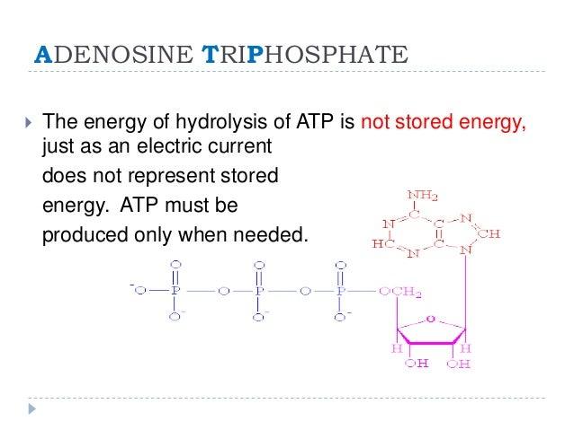 Adenosine Triphosphate and Aerobic Respiration
