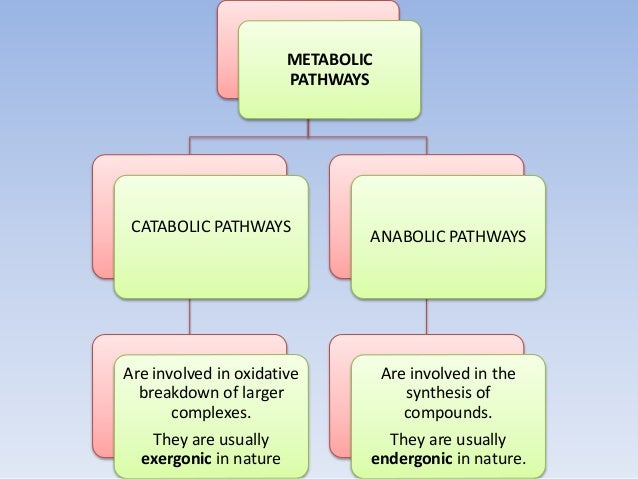 METABOLIC PATHWAYS CATABOLIC PATHWAYS Are involved in oxidative breakdown of larger complexes. They are usually exergonic ...