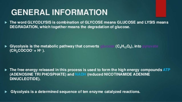 Glycolysis Slide 2