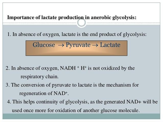 glycolysis oxidation glucose lactate importance production gluconeogenesis absence
