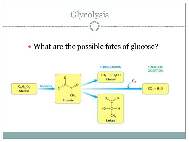 Glycolysis Glucose Oxidation