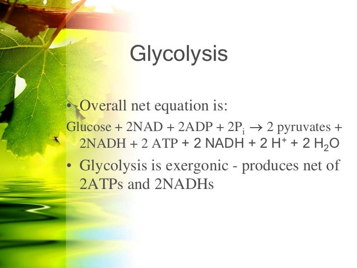 Glycolysis Equation