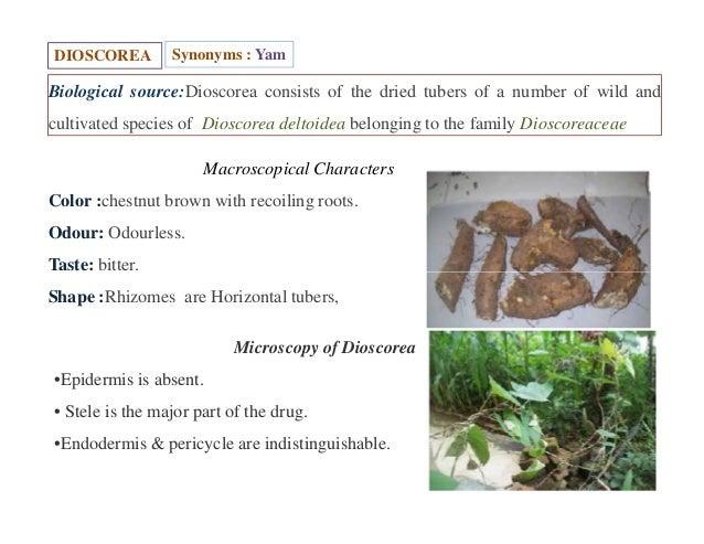 steroidal glycosides pdf